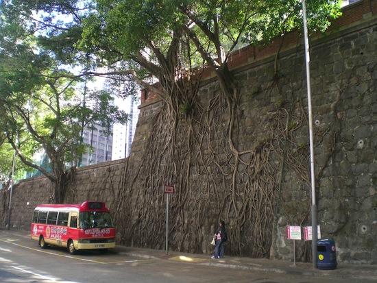 деревья (550x413, 115Kb)