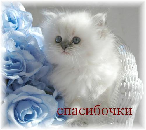 http://img0.liveinternet.ru/images/attach/c/5/87/763/87763640_18.jpg