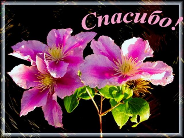 http://img0.liveinternet.ru/images/attach/c/5/87/763/87763676_20.jpg