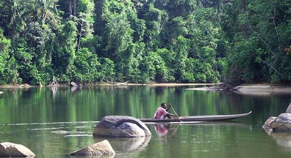 Самые красивые леса мира 3 (600x327, 78Kb)