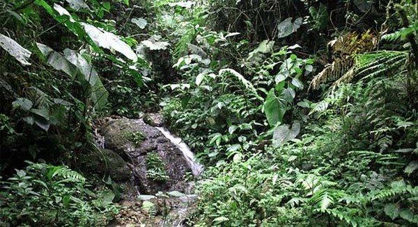 Самые красивые леса мира 5 (600x327, 102Kb)