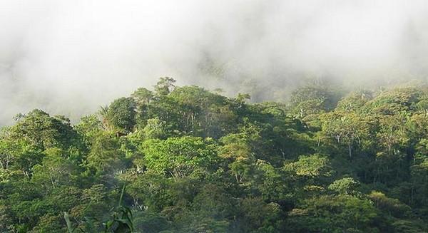 Самые красивые леса мира 7 (600x327, 61Kb)