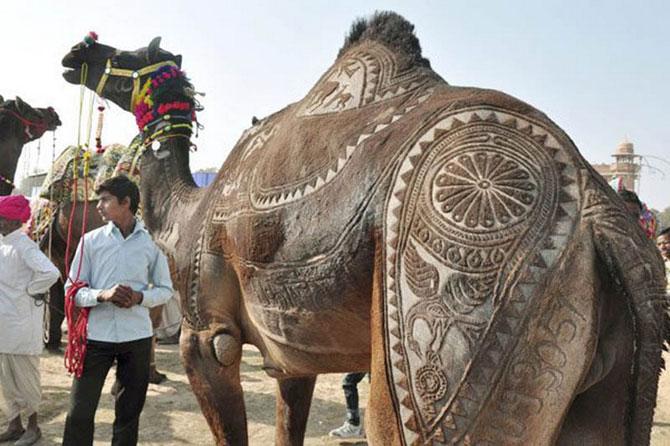 фото верблюд 2 (670x446, 80Kb)