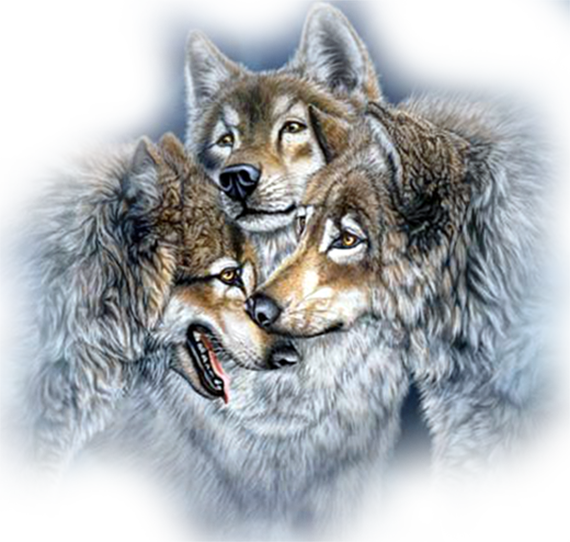 3996605_Wolf3 (570x542, 564Kb)