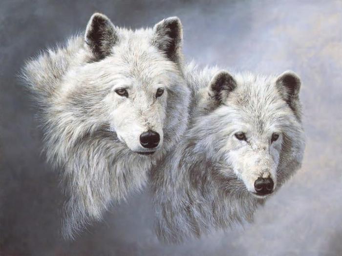 Wolfs (1) (700x525, 294Kb)