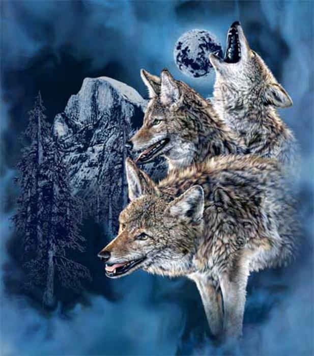 Wolfs (8) (617x700, 406Kb)