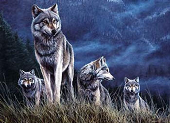 Wolfs (10) (700x508, 78Kb)