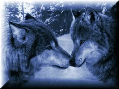 Wolfs (16) (384x288, 20Kb)