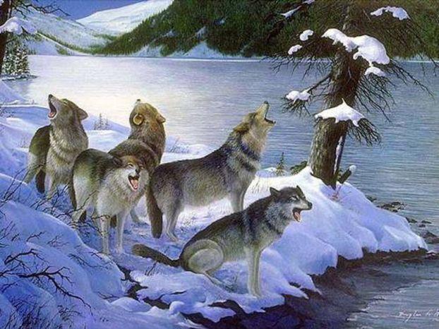 Wolfs (20) (622x466, 69Kb)