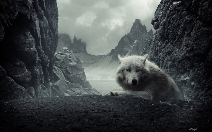 Wolfs (22) (700x437, 298Kb)