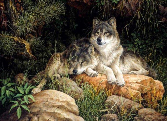 Wolfs (25) (700x507, 104Kb)