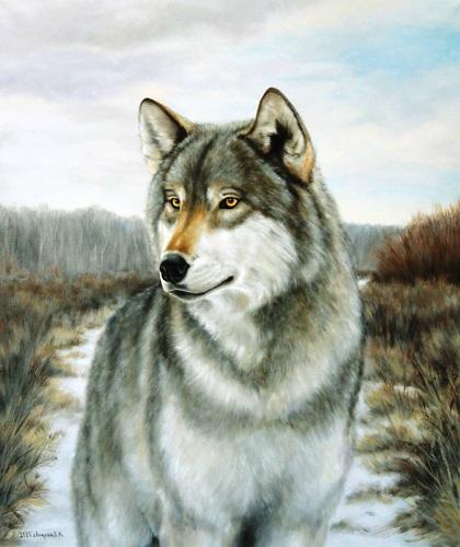 Wolfs (34) (420x500, 83Kb)