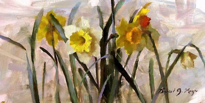 Daffodils (700x352, 113Kb)