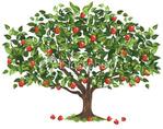 Превью istockphoto_6543000-apple-tree (380x299, 82Kb)