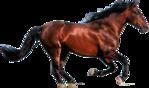 Превью Кони на прозрачном слое (9) (700x412, 252Kb)