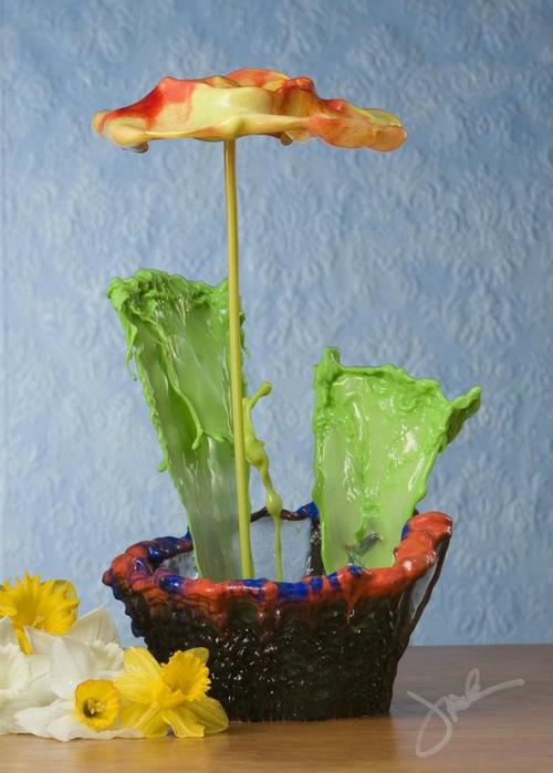 необычные цветы Jack Long 1 (500x700, 320Kb)