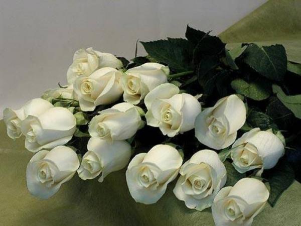 Большой букет белых роз картинки