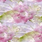 Превью нежный цветок (200x200, 18Kb)
