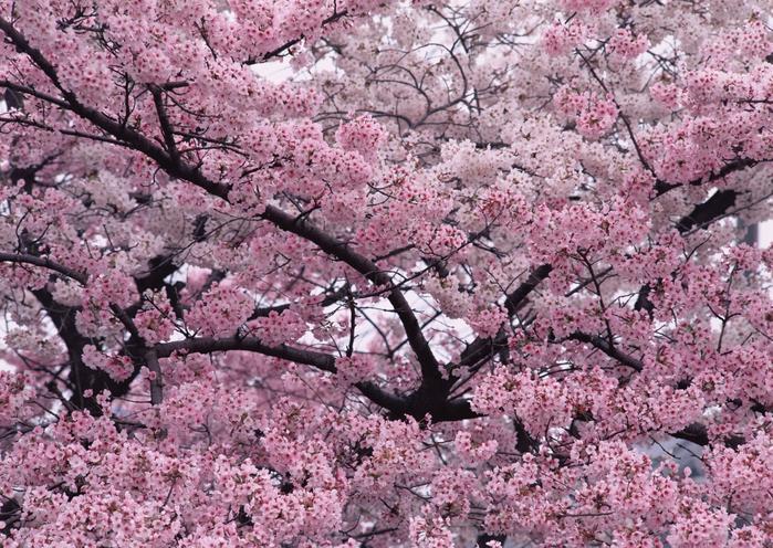 Картинки с деревьями и цветами 4