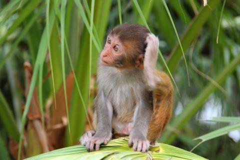 Картинки по запросу милые обезьянки фото | Обезьяны