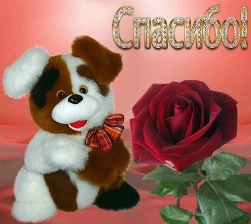 спасибо-пес и роза (500x448, 42Kb)