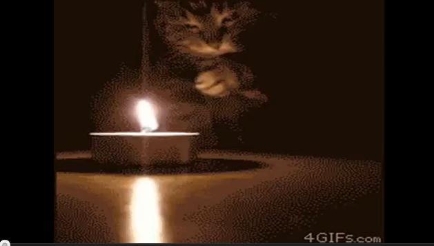 Выйду ночью в кухню с котом.../3518263_cat (629x357, 19Kb)