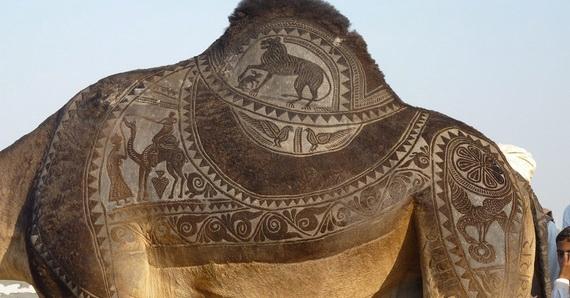 верблюжьи картины (570x298, 128Kb)