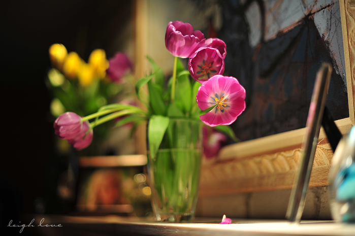 3749748_tulip_color (700x465, 193Kb)