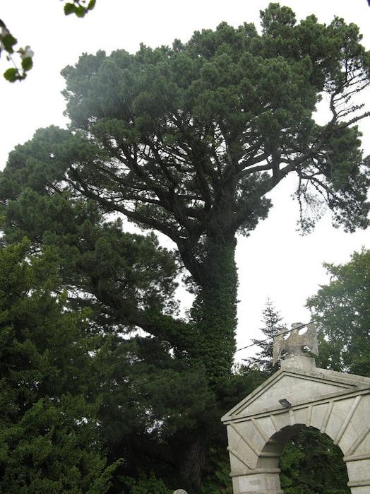 Powerscourt Gardens -Сад Пауэрскоурт . 83096