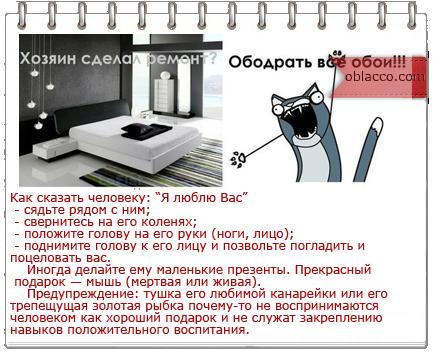 3518263__1_ (604x306, 31Kb)/3518263_kot_1_ (434x352, 126Kb)