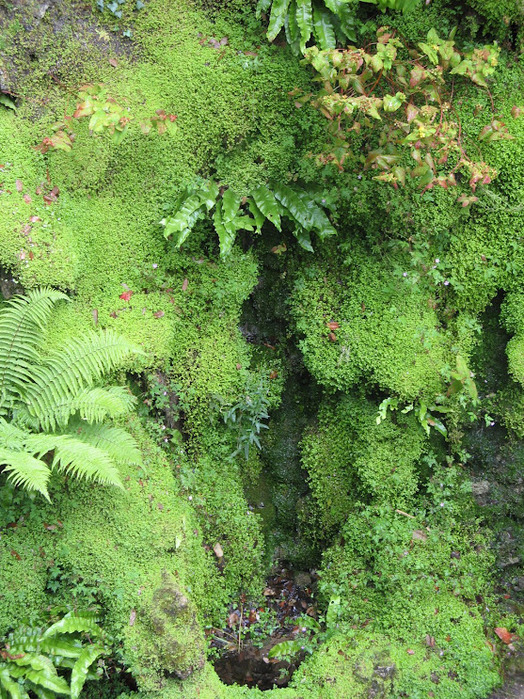 Powerscourt Gardens -Сад Пауэрскоурт . 89187