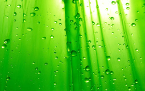зеленый-образец (300x188, 31Kb)