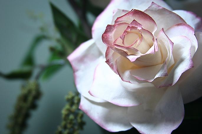 paper_roses (685x457, 224Kb)