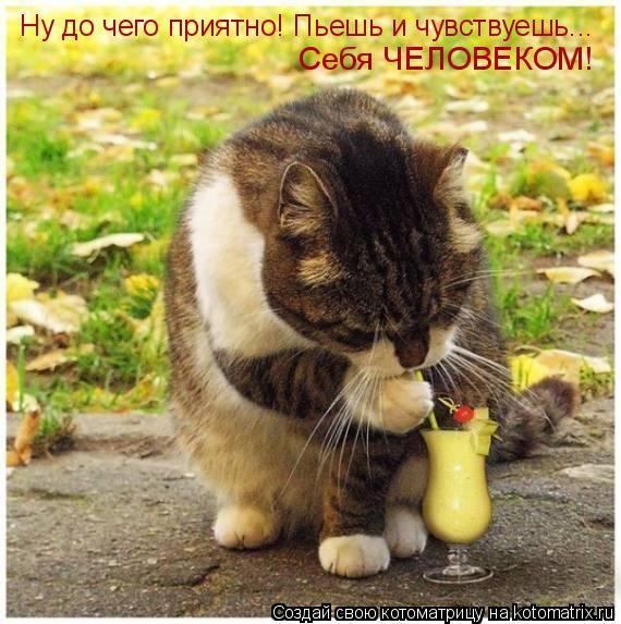 humor_2693_20091028_1999338826 (570x573, 67Kb)