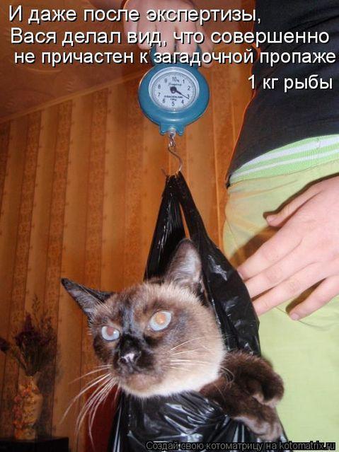 normal_humor_2659_20091028_1777880082 (479x639, 58Kb)