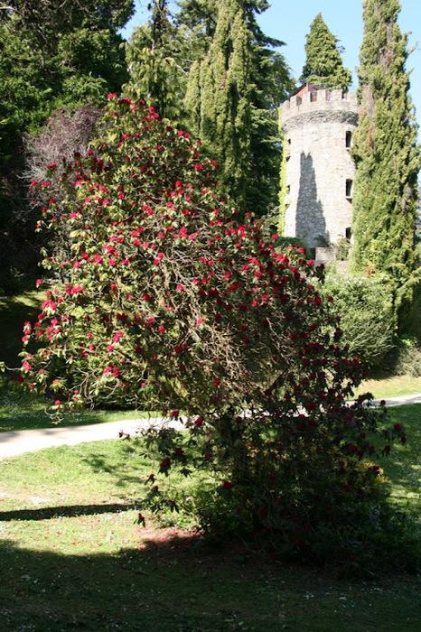 Powerscourt Gardens -Сад Пауэрскоурт . 82263