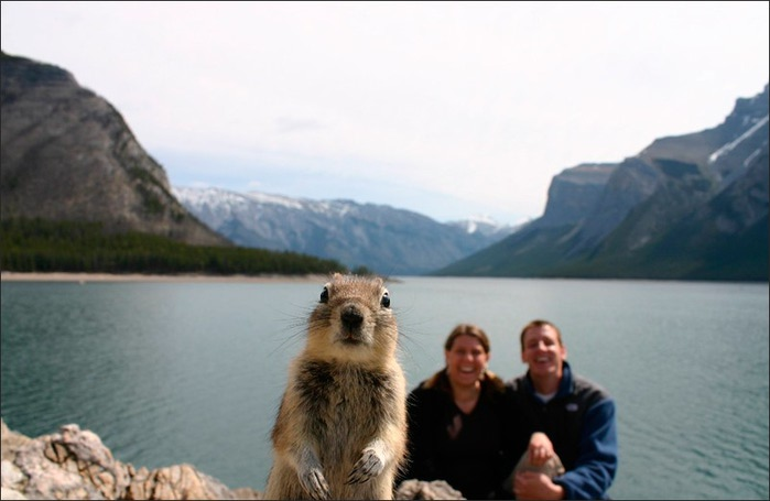 4524271_squirrelportraitbanffsw (700x455, 52Kb)