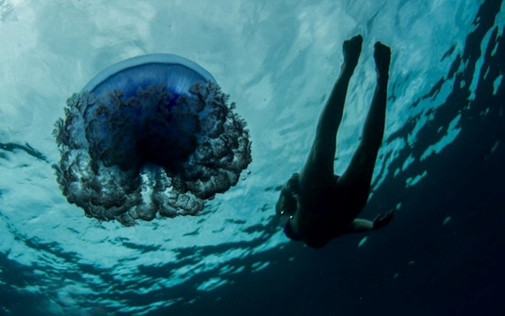 подводный мир5 (570x357, 110Kb)