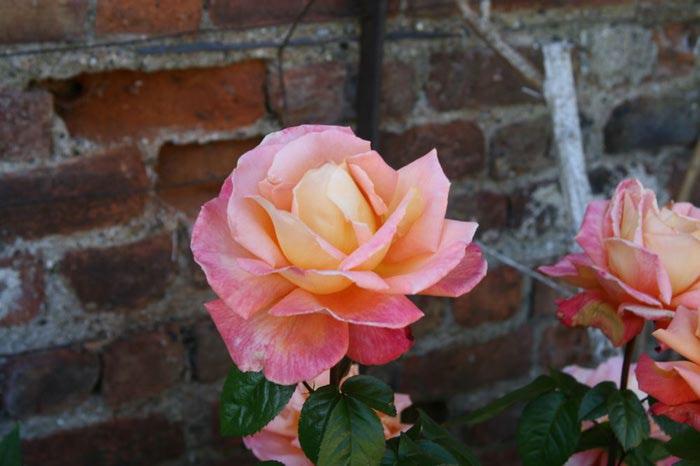Powerscourt Gardens -Сад Пауэрскоурт . 32493