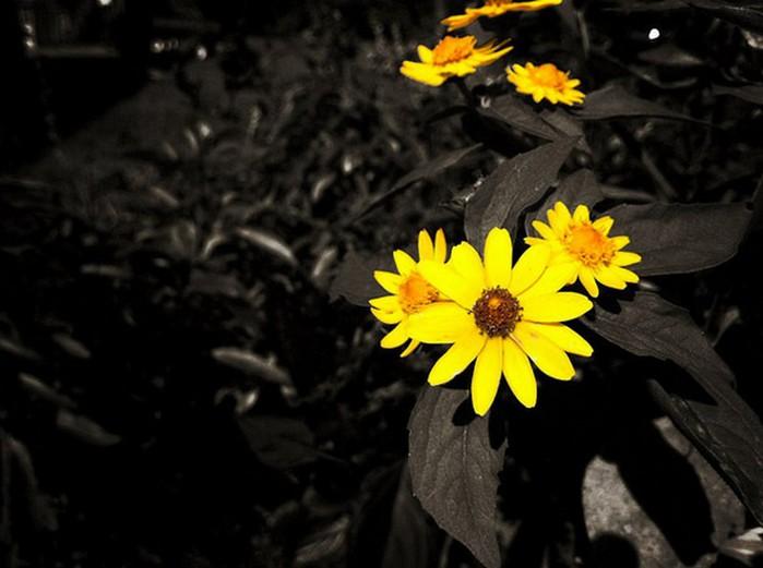 25 красивых фото с iphone 1 (700x521, 67Kb)