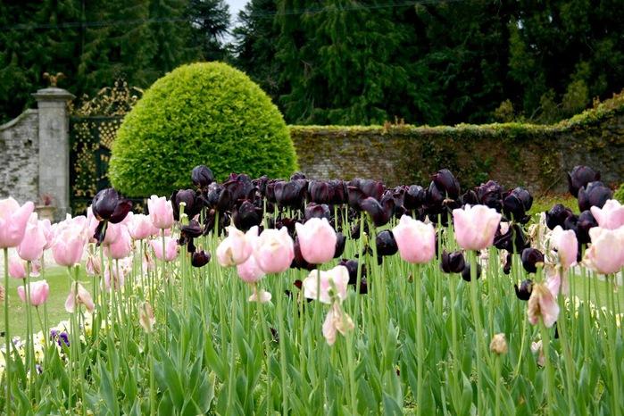 Powerscourt Gardens -Сад Пауэрскоурт . 53446