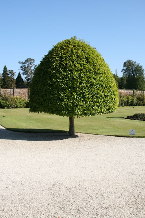 Powerscourt Gardens -Сад Пауэрскоурт . 26460