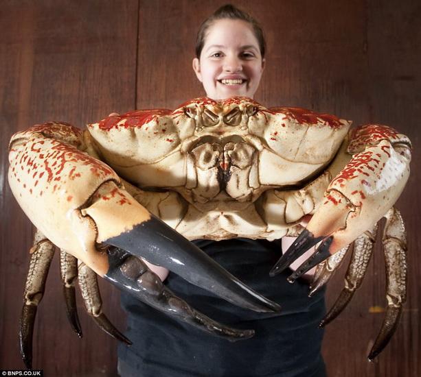 1336248037_crab (613x550, 124Kb)