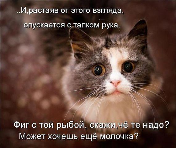 http://img0.liveinternet.ru/images/attach/c/5/88/294/88294248_2.jpg