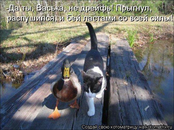 82809199_kotomatrica_10 (604x453, 74Kb)