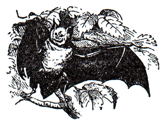 Horse-Shoe-Bat (532x409, 320Kb)