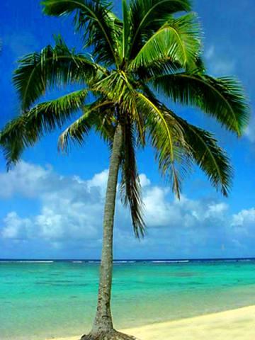 palm_tree_2 (360x480, 30Kb)