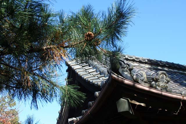 деревья японии (640x427, 101Kb)