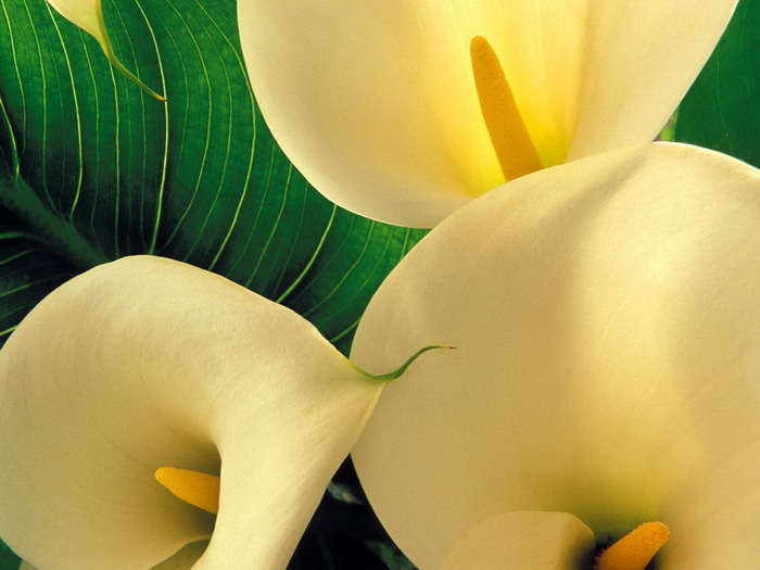1328353721_floweres-51 (700x525, 95Kb)