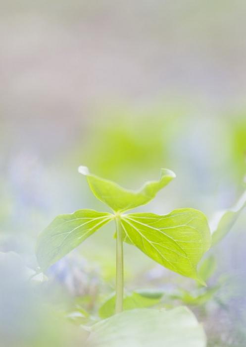 Ванильные фотографии цветов от Sozaijiten 6 (497x700, 192Kb)